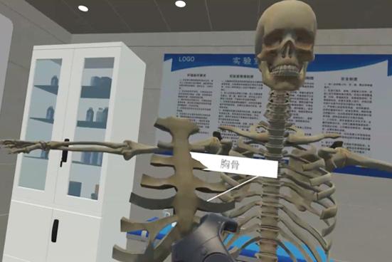 VR人体拆分说球帝直播app下载苹果版交互展示